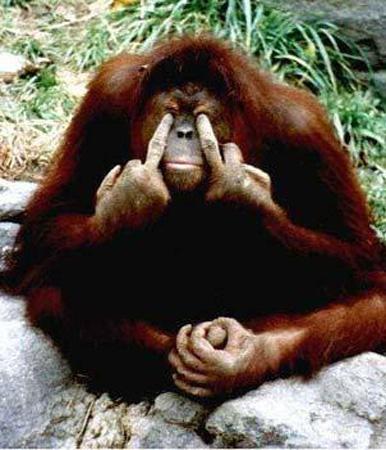 Małpy w stadzie